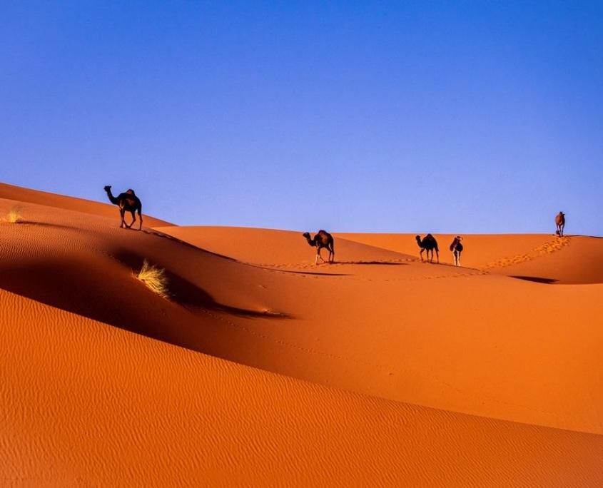 Photo de dromadaires qui marchent dans le désert du Sahara à proximité de Marrakech au Maroc